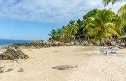Nyfikna Komba Madagascar Fotografering för Bildbyråer