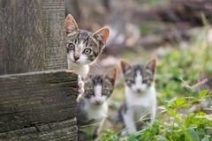 Nyfikna men blyga kattungar Arkivbild