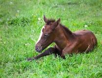 Nyfött behandla som ett barn hästen på det gröna gräset Royaltyfri Bild