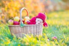 Nyfött behandla som ett barn i korg med äpplen i trädgård Fotografering för Bildbyråer