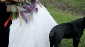 Nygifta personer i en parkera med en svart hund lager videofilmer