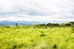 Nyika-Hochebene in Malawi Stockbilder