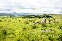 Nyika platå i Malawi Royaltyfria Foton