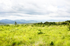 Nyika Plateau in Malawi. Central Africa, on a Rainy Day Stock Images