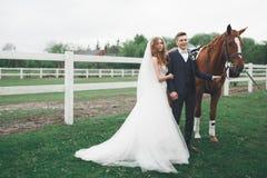 Nyligen gifta brölloppar står med den härliga hästen på naturen royaltyfri fotografi