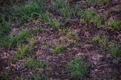 Nyligen kärnad ur gräsmatta arkivfoto