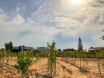 Nyligen planterade träd på en lantgård bevattnas med en sökande effektivitet för bevattningsystem i en tid av torkan i Israel royaltyfri foto