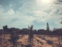 Nyligen planterade träd på en lantgård bevattnas med en sökande effektivitet för bevattningsystem i en tid av torkan i Israel arkivbilder