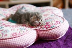 Nyligen uthärdad kattunge Royaltyfria Bilder