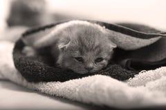 Nyligen uthärdade kattungar royaltyfri fotografi