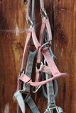 Nylon bridles against barn wall Stock Photos