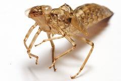 蜻蜓nymp 库存照片