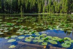 Free Nymph Lake, Colorado Stock Photos - 107109723
