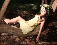 Nymph sitting on a tree Stock Image
