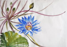 Nymphaea flower watercolor painting Stock Photography