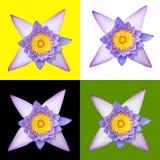 Nymphaea nouchali flower Stock Images