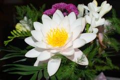 Nymphaeaceae bianco Fotografie Stock Libere da Diritti
