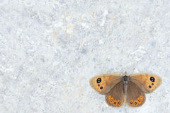 Nymphalidae butterfly. The beautiful nymphalidae butterfly on rock Royalty Free Stock Images