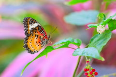 Free Nymphalidae Butterfly Close-up Shot Royalty Free Stock Image - 52423486