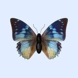 Nymphalidaefjäril - Charaxes Smaragdalis Arkivfoton