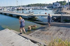Girl and woman walk dogs along the pier. NYNASHAMN, SWEDEN - JULY 18, 2018: Girl and woman walk dogs along the pier on July 18, 2018 in Nynashamn, Sweden stock image