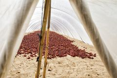 Nyora español típico Cultivo bajo cubierta plástica Imagenes de archivo