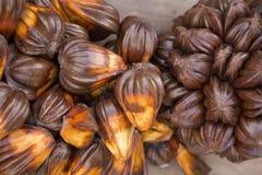 Nypa棕榈果子在泰国,关闭nypa种子本质上 库存图片