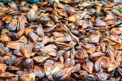 Nypa棕榈果子在泰国 免版税图库摄影