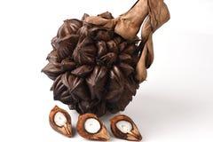 Nypa, Atap-palm, Nipa-palm, Mangrovepalm, vruchten Royalty-vrije Stock Fotografie