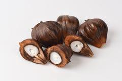Nypa, Atap palma, Nipa palma, Namorzynowa palma, owoc Zdjęcie Stock