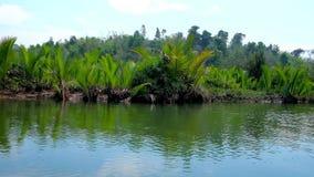 Nypa palm gąszcze, Kangy rzeka, Chaung Tha, Myanmar zdjęcie wideo
