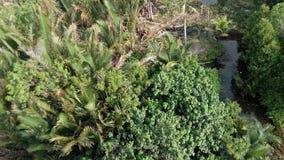 Nypaen gömma i handflatan skogen Arkivfoton