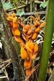 Nypah-Palmenblume und -früchte stockbilder