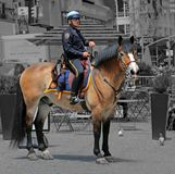 NYPD police officer on horse stock image