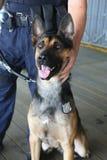 NYPD sprzeciwiają się terroryzmu biura K-9 psią providing ochronę w Nowy Jork Obraz Royalty Free