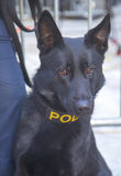 NYPD transit bureau K-9 German Shepherd providing  Stock Images