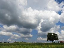 NYS Crop field under puffy white clouds in FingerLakes. The Finger Lakes region is the center of state agriculture, and the state is a top-ten national producer Royalty Free Stock Photography