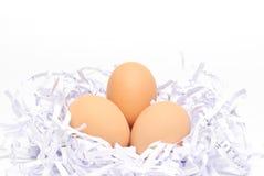 Nytt ägg Fotografering för Bildbyråer