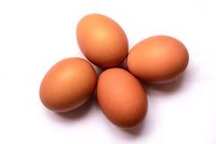 Nytt ägg på vit bakgrund isoleted ägg Arkivbild