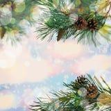 nytt år Bakgrund för skogvinterferie Sörja med kottar i t royaltyfria foton