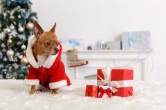 nytt år Dekorerat rum med hunden som bär den santa dräkten som sitter på soffan som ser nyfikna gåvor arkivfoton
