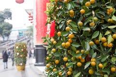 nytt år för kinesisk kumquat royaltyfri fotografi