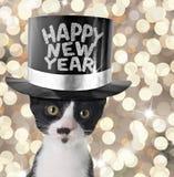 nytt år för lycklig kattunge royaltyfri fotografi