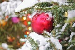 Nytt års röd boll för jul på ett träd i snön, närbild, nytt års kort royaltyfria bilder