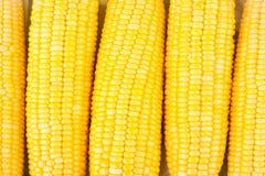 Nytt öra av majs på majskolvkärnor eller korn av mogen havre på vita den isolerade bakgrundsgrönsaken Arkivfoto