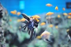 nytt akvarium Royaltyfria Foton
