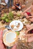 Nytt av kokosnöten med att beskjuta kokosnötbakgrund arkivfoto