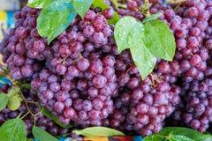 Nytt av röda druvor royaltyfri fotografi