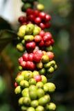 nytt bönakaffe Arkivfoto
