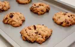 Nytt bakade kakor för chokladstor bit- och pecannötmutter Royaltyfria Bilder